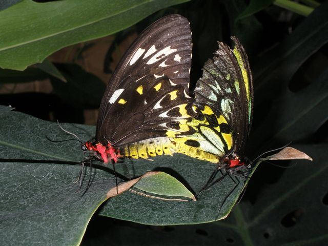 butterfly-action-1