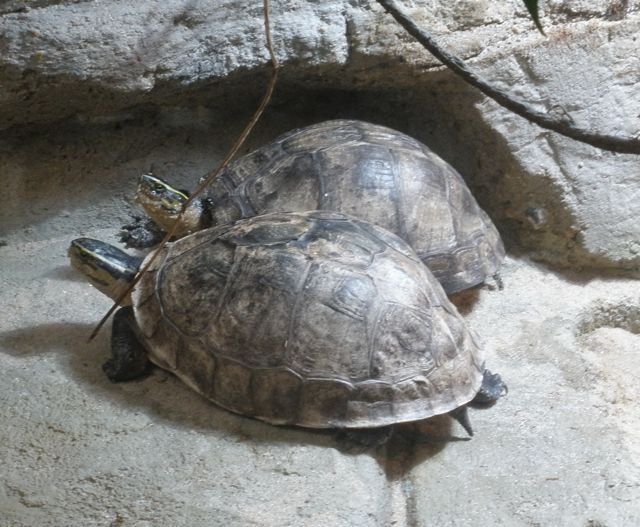 turtle-action-5