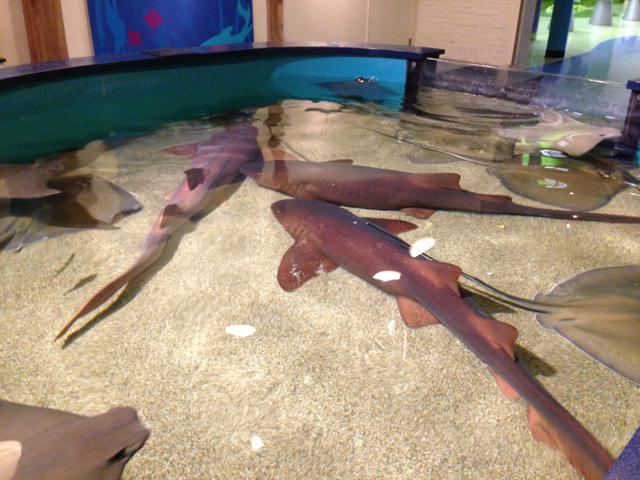 maritime sharks 2