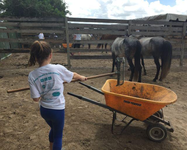 horses - summer