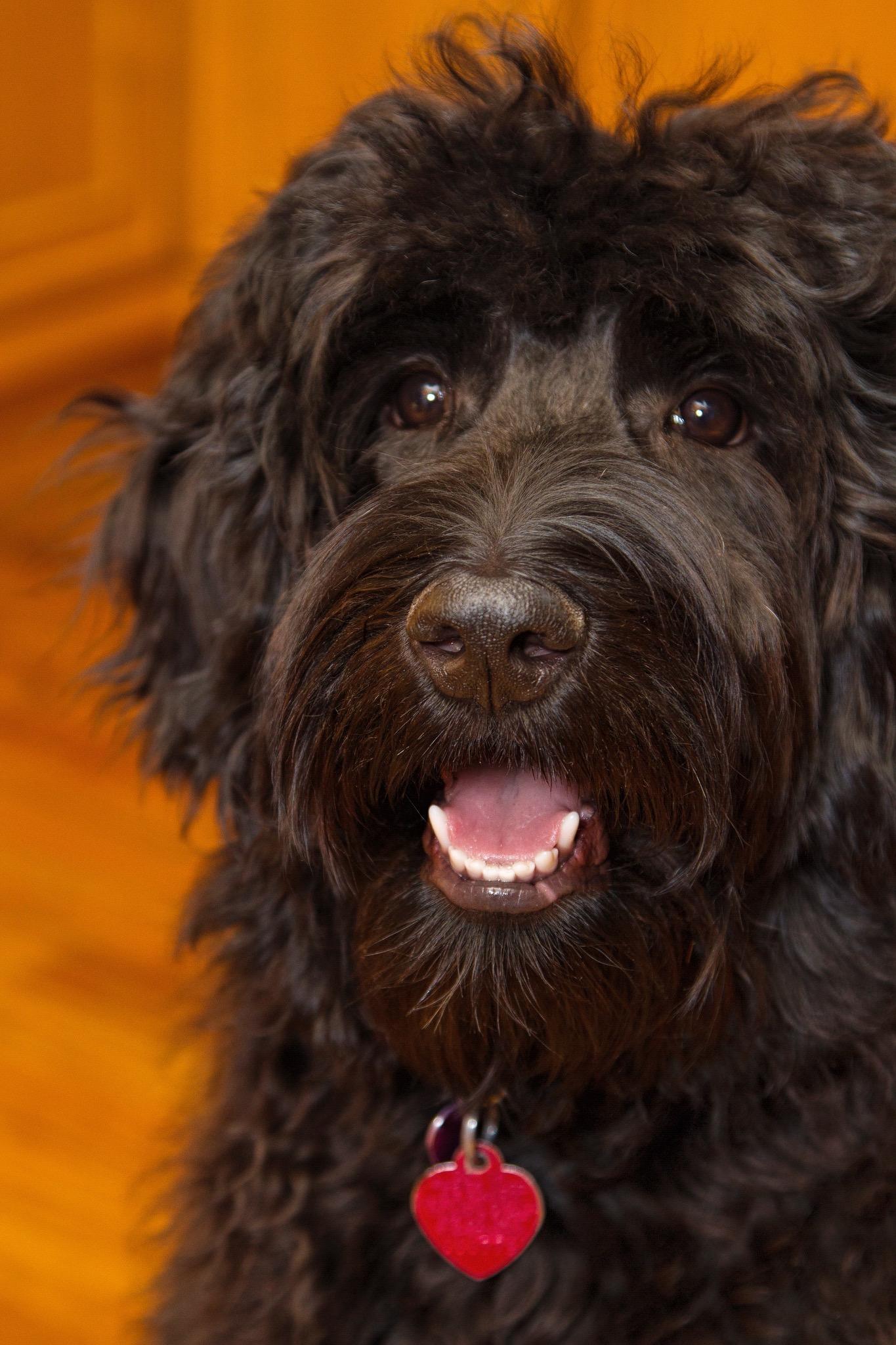 monicas dog